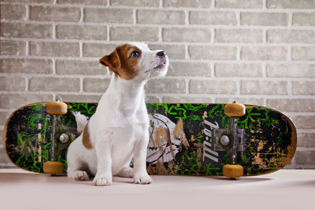 chien-nourriture-saine-regime-equilibre-nourriture-canine